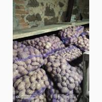 Продам качественный продовольственный, семенной и мелкий картофель собственного производс