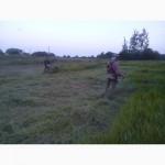 Покос травы киев