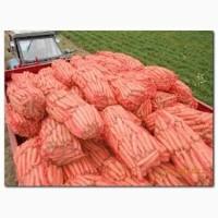 Фермерское хазяйство реализует морковь поставками 3 т. и больше