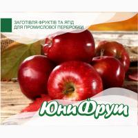 Купим яблоки большими объемами для переработки