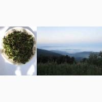 Иван чай рубленый стебель и лист, крупный, растение, кипрей, epilobium angustifolium, Карп