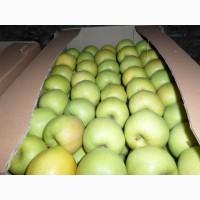 Продаем яблоки по безналичному расчету с НДС, и на экспорт. Урожай 2018г