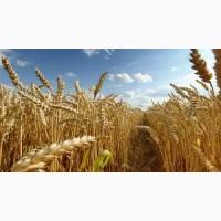 Покупаем пшеницу(Урожай 2019)