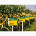 Saatbau (Заатбау) семена кукурузы Каталог гибридов, Цены