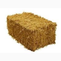 Продаємо пшеничну солому