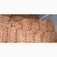 Картофель для столовых оптом