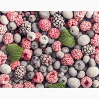 Закупка замороженных ягод оптом