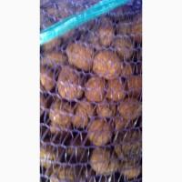 Продам цілі грецькі горіхи