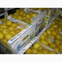 Продам лимони турецька в хорошій якості без хвороб