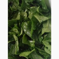 Кинза укроп петрушка салат шпинат лук
