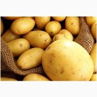 Покупаем картофель от 20 тонн по всей Украине. Самовывоз