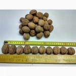 Продам грецкий орех 32(+), упаковка на экспорт