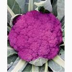 Продам семена Капуста цветная Сицилийская Пурпурная