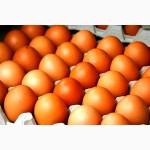 Сано (Sano) премікси, кормові добавки, готовий корм для КУРЕЙ - НЕСУЧОК
