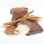 Куплю пшеницю, ячмінь, овес, кукурудзу