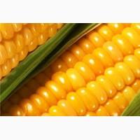 Купуємо кукурудзу. Вся Україна