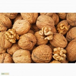 Куплю целый грецкий орех дорого