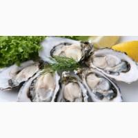 Устрицы Лобстеры Рыбу Морепродукты свежие импортированные