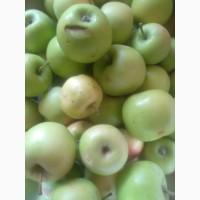Продам яблука з свого сада. На переробку