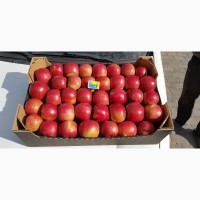 Продам яблука Айдарет