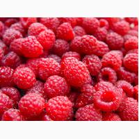 Продам малину и другие ягоды