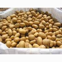 На постоянной основе покупаем картофель. Любой регион. От 20 тонн