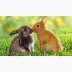 Корм для откорма кроликов в Одессе, от 1, 5 месяцев, гранулированный
