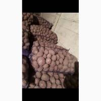 Продам картофель средней фракции из песка