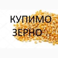 На постійній основі закуповуємо кукурудзу з елеваторів та господарств