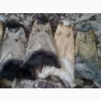 Покупаем шкурки кролей от населения и сборщиков