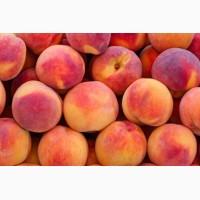 Реалезуем персики- ранний, средний и поздний