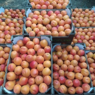 Продаем абрикосы