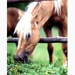 Сено отличного качества для лошадей