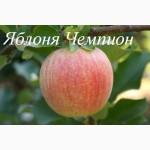 Саженцы яблони от производителя