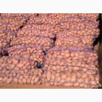Семенной картофель сорта Белароза, Мелоди