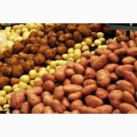 Продам картофель разный сорт