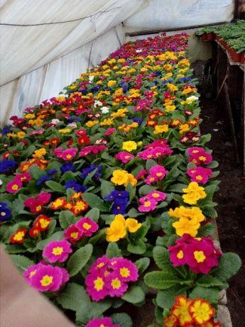 Фото 2. Цветы оптом к 8 Марта