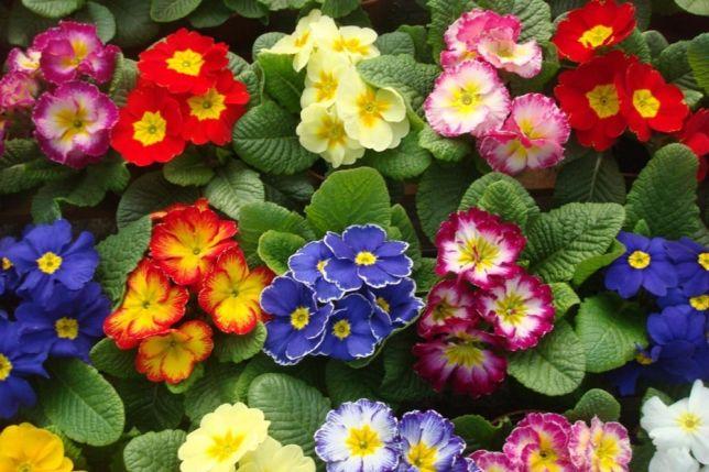 Фото 3. Цветы оптом к 8 Марта