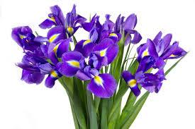 Фото 7. Цветы оптом к 8 Марта