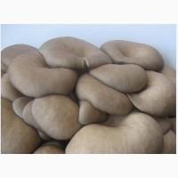 Мицелий грибов Вешенка, мешки для выращивания, технология