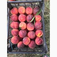 Продам персик оптом различных сортов