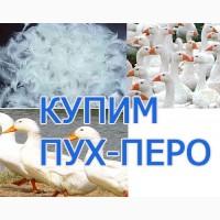 Закупаем пух-перо гуся, утки, курицы, а также б/у подушки, перины по оптовым ценам