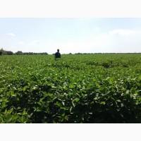 Продам насіння сої КОФУ (не ГМО) Канада