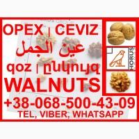 Walnuts / Грецкий орех / Ceviz / Ընկույզի / الجوز