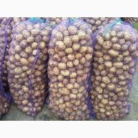 Продам картофель Казахстан