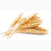 Пшеница 2, 3, 4класс FOB, CIF, CFR