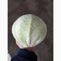 Продам овощи опт и мелкий опт