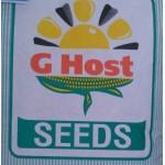Гибрид кукурузы Ghost (Канада) Джихост