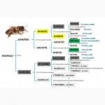 Заказ на 2018 год пчеломатки Бакфаст. Матки прошли тестирование в Украине