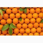 Продам оптом апельсины